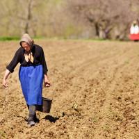 Somos semeadores de morte ou vida?